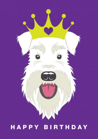 All white schnauzer wearing a crown on a purple background