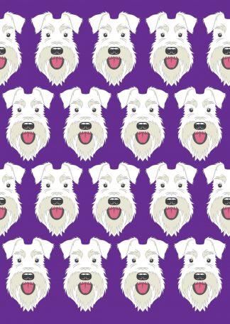 All white schnauzer on purple background