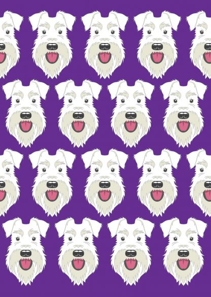 All white schnauzer on purple background